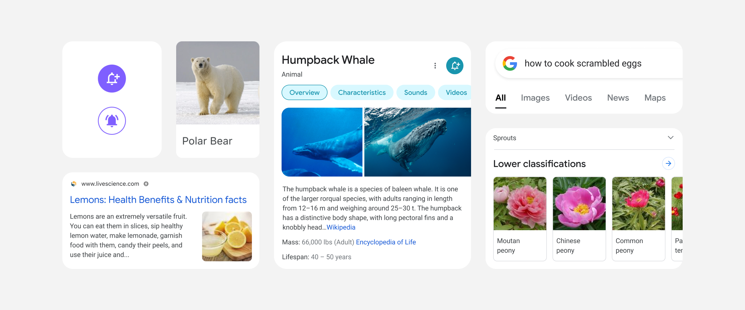 Google refreshes its mobile search experience – ProWellTech